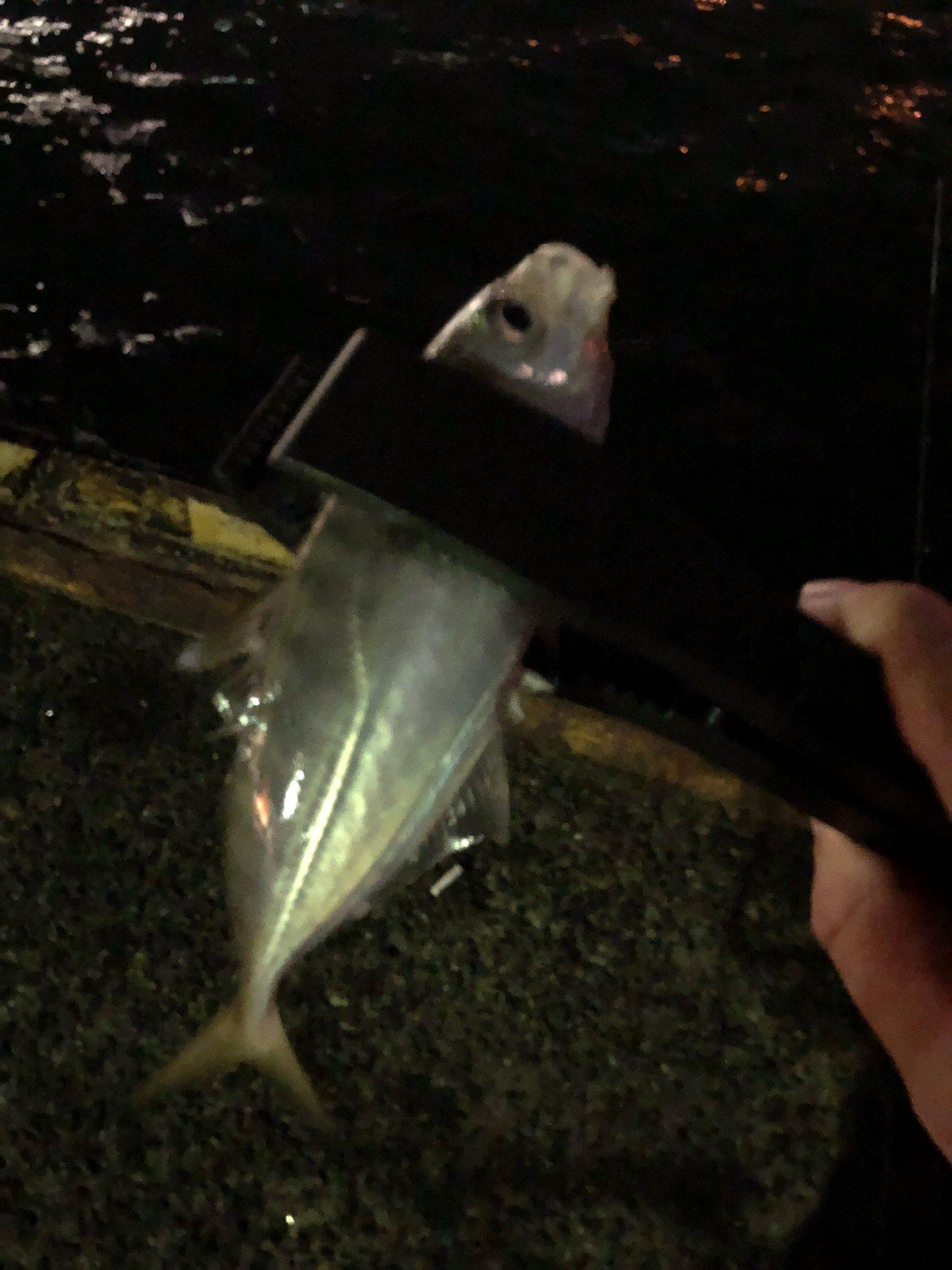 ZESUSさんの投稿画像,写っている魚はアジ,メバル