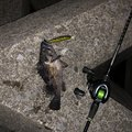 n@oさんの青森県での釣果写真