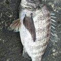 ヨッシーさんの山形県での釣果写真