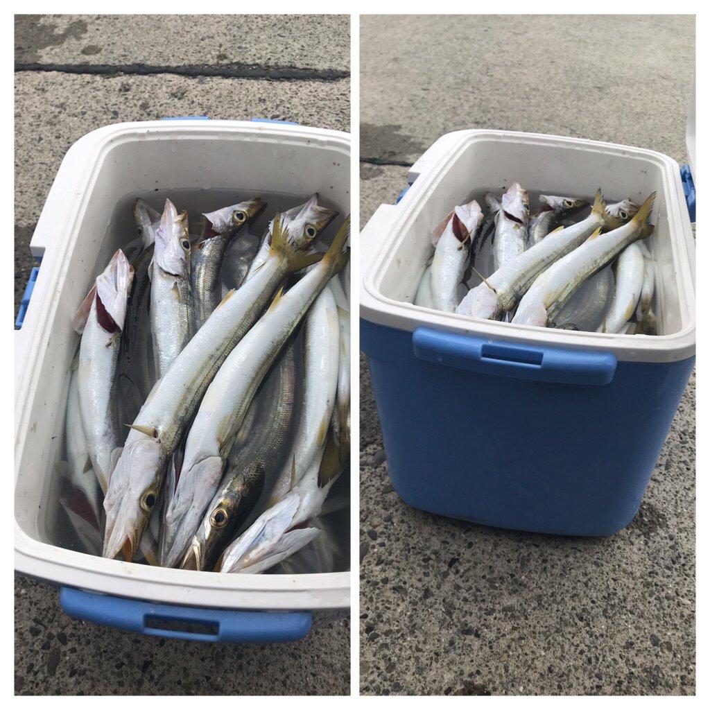 メジナオヤ🐟さんの投稿画像,写っている魚はカマス