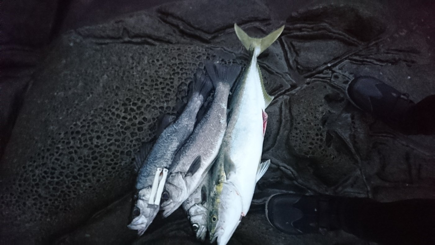 スマイルさんの投稿画像,写っている魚は