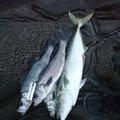 スマイルさんの鹿児島県いちき串木野市での釣果写真