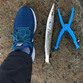 ACEさんの鹿児島県出水郡での釣果写真