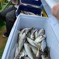 kotarawさんの神奈川県横浜市での釣果写真