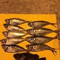 ドンコビッさんの鹿児島県垂水市での釣果写真
