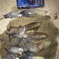 カメさんの岡山県での釣果写真