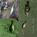 タマさんの千葉県安房郡での釣果写真