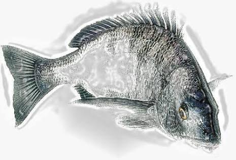 じゅうしまつさんの投稿画像,写っている魚は