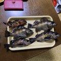 ノロリさんの和歌山県での釣果写真