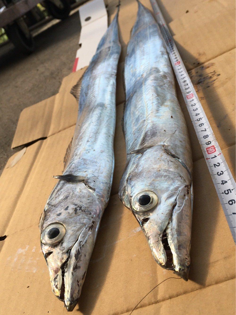 ひろゆき10さんの投稿画像,写っている魚はタチウオ