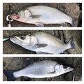 け〜たゴリラさんの鹿児島県南さつま市での釣果写真