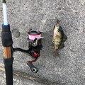 TERUさんの広島県呉市での釣果写真