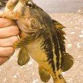ひでさんの北海道での釣果写真