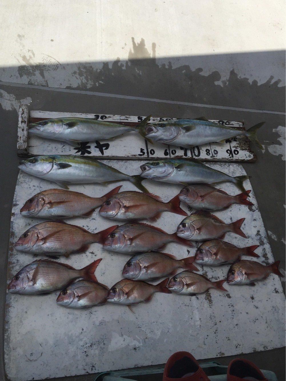 丸田海猫さんの投稿画像,写っている魚はマダイ