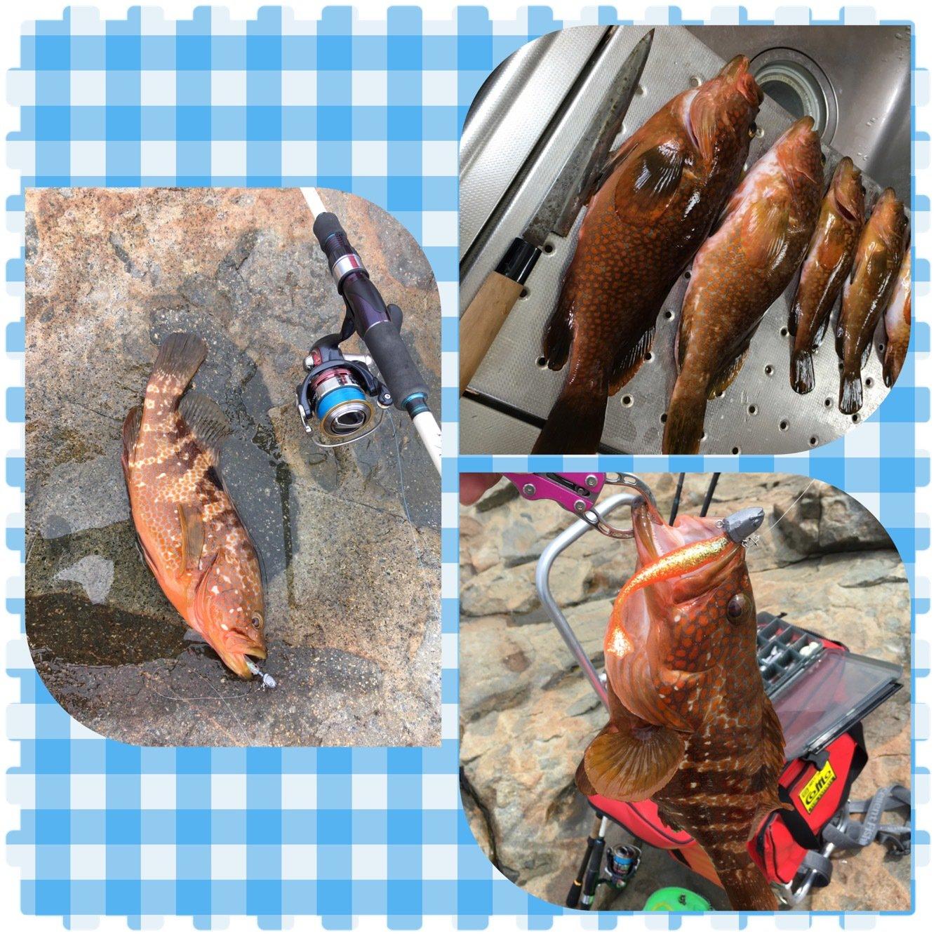 ゆうきりんりんさんの投稿画像,写っている魚はキジハタ