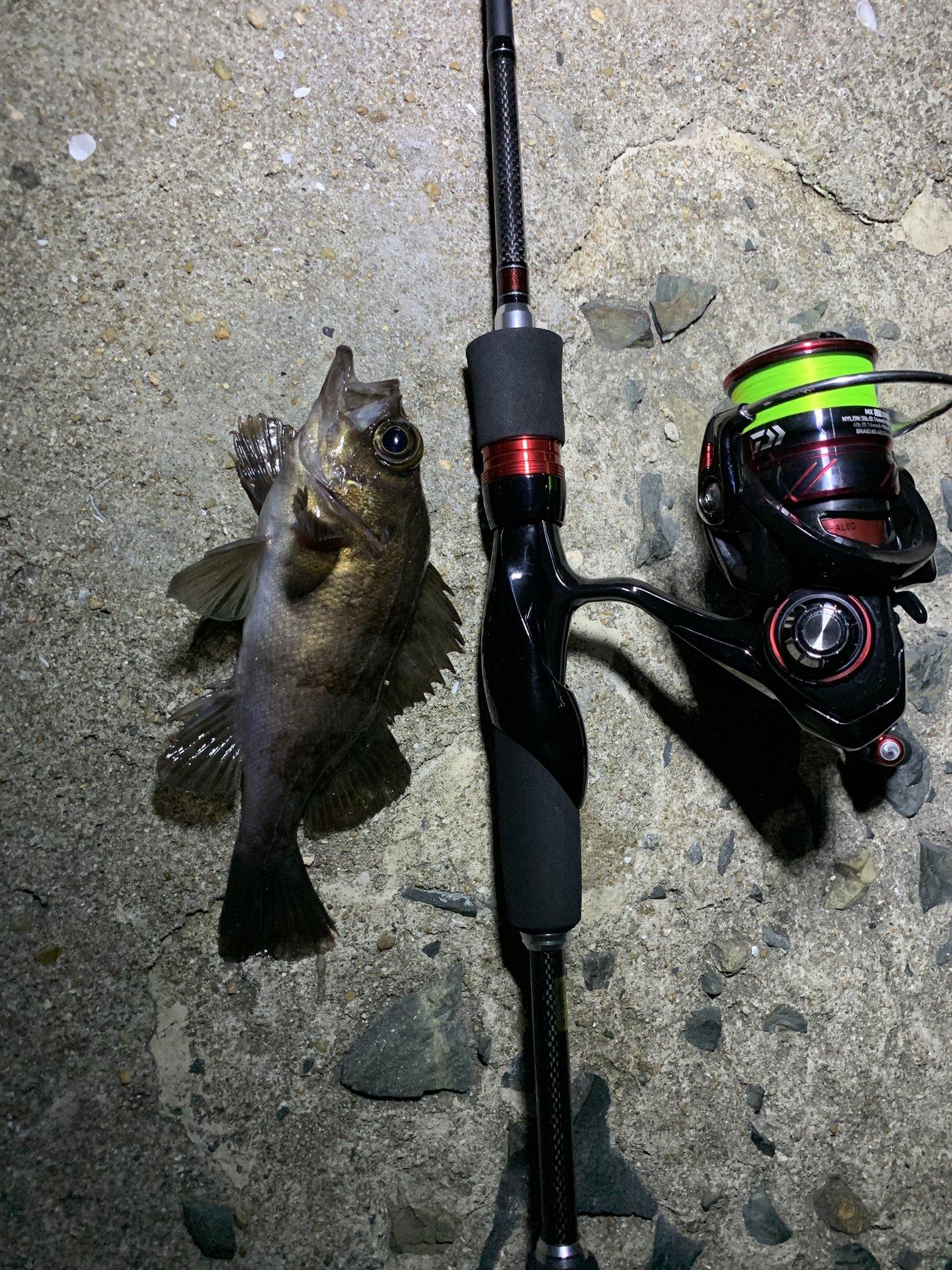 釣りばたさんの投稿画像,写っている魚はメバル