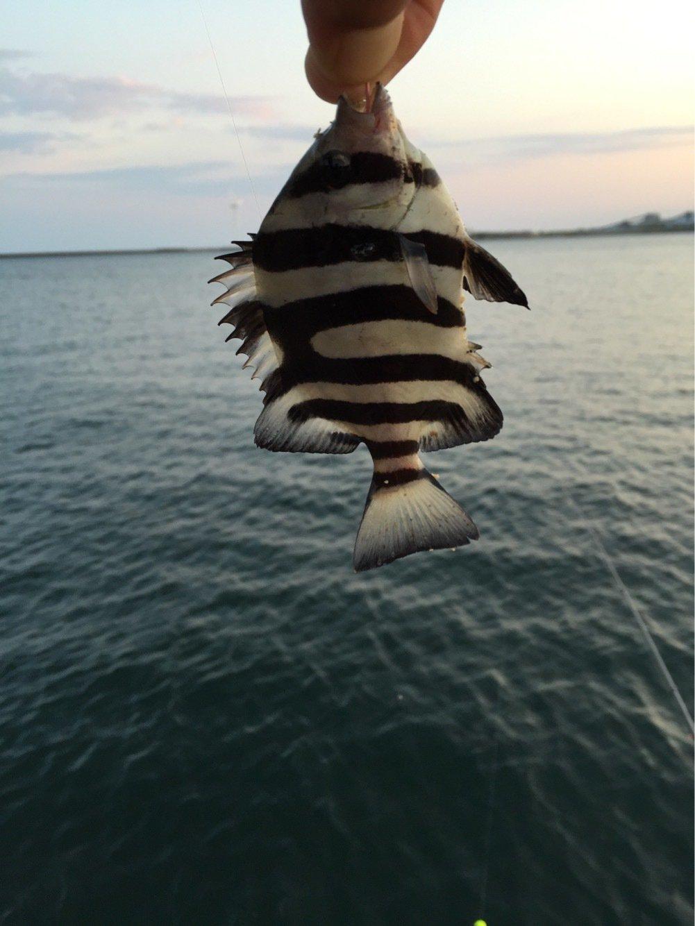 高橋幹博さんの投稿画像,写っている魚は