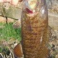 釣れないの豚さんの茨城県での釣果写真