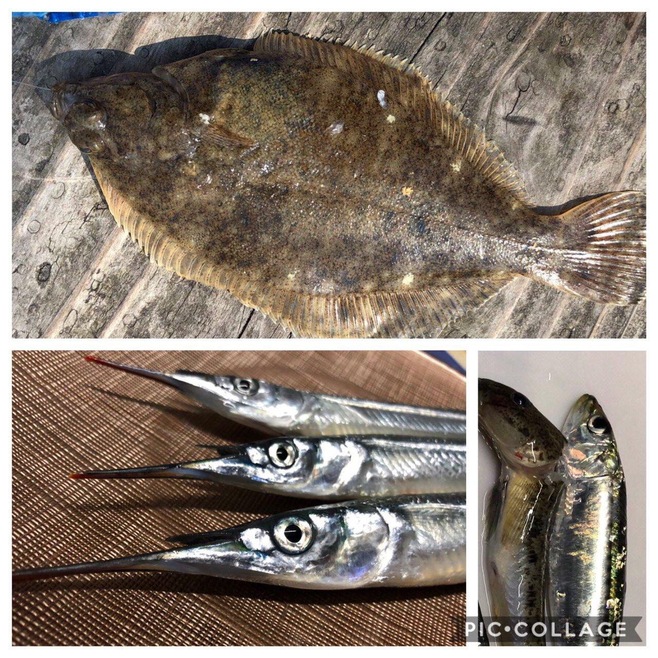 トニさんの投稿画像,写っている魚はカレイ,サヨリ,マハゼ,マイワシ