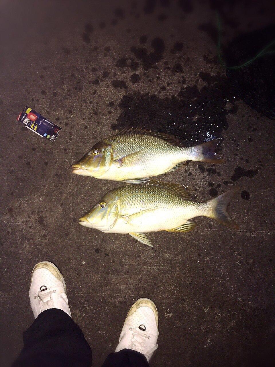 ボスさんの投稿画像,写っている魚はハマフエフキダイ