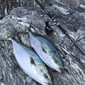 Mr.丸坊主さんの熊本県での釣果写真