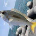 setoちゃんさんの沖縄県宜野湾市での釣果写真