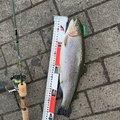 ポニーさんの神奈川県足柄下郡での釣果写真