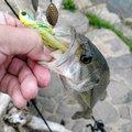 なぎ@釣り歴2年目さんの宮崎県延岡市での釣果写真
