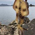 谷山港さんの鹿児島県指宿市での釣果写真
