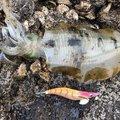 谷山港さんの鹿児島県南九州市での釣果写真