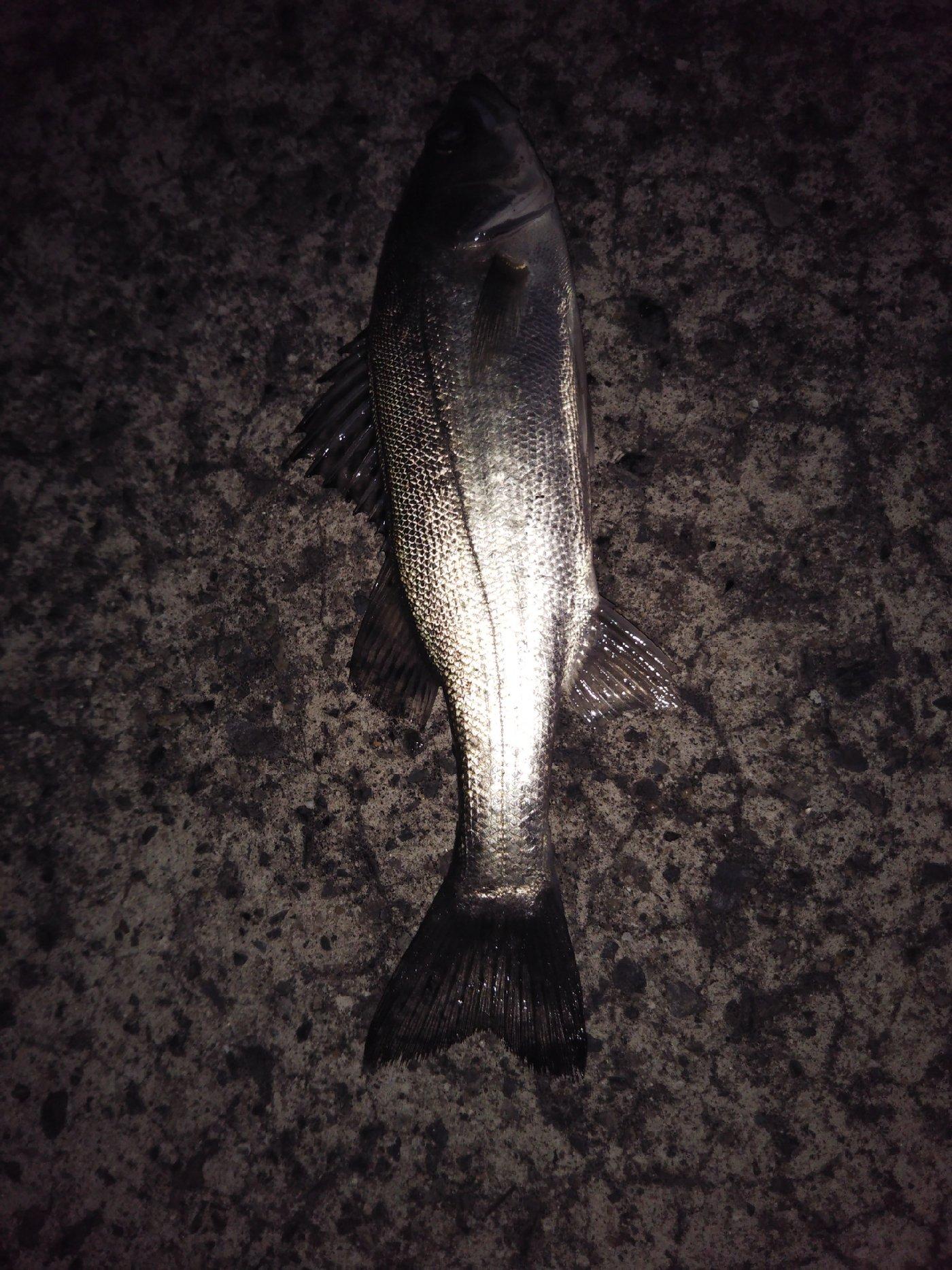suさんの投稿画像,写っている魚は