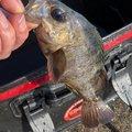 そうまさんの長野県北安曇郡での釣果写真