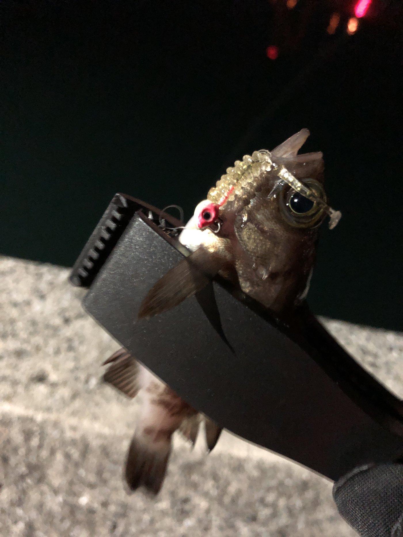 ZESUSさんの投稿画像,写っている魚はメバル