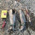 なめこさんの山口県での釣果写真