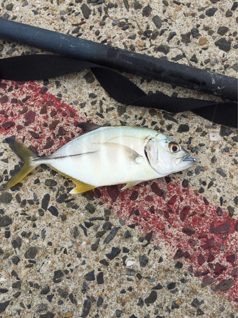 タローさんの投稿画像,写っている魚は
