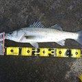みっちぃさんの石川県小松市での釣果写真
