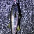 キチさんの熊本県での釣果写真