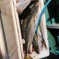 なかおさんの静岡県熱海市での釣果写真