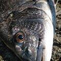 かずくんさんの和歌山県での釣果写真