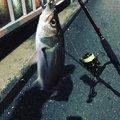 さとさんの東京都での釣果写真