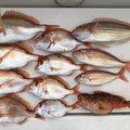 岩田 あすかさんの山口県での釣果写真