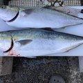 こるべるさんの和歌山県での釣果写真