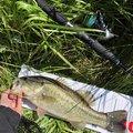 ラテス81さんの大分県中津市での釣果写真