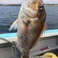 きょんきょんさんの静岡県富士市での釣果写真