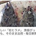 Taさんの静岡県富士市での釣果写真