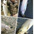 しゅんさんの静岡県駿東郡での釣果写真