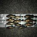 ともたろうさんの石川県での釣果写真