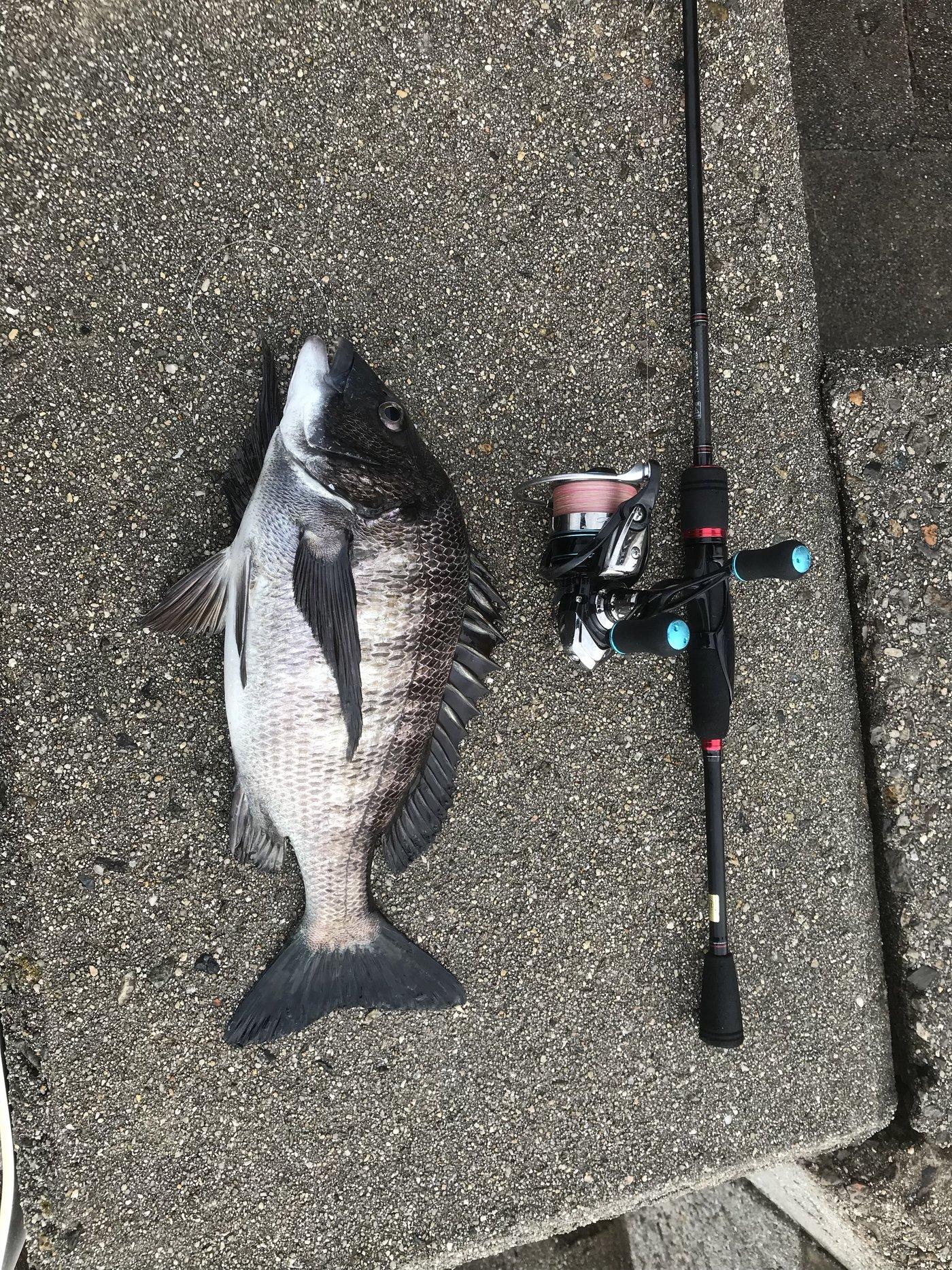 オカラバー12さんの投稿画像,写っている魚はクロダイ