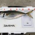イーグルさんの福井県での釣果写真