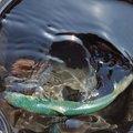 タッシーさんの福岡県福津市での釣果写真